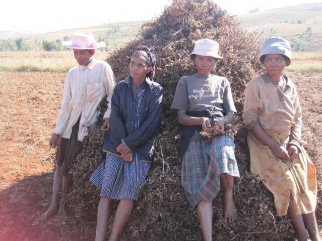 When Peanuts Help To Conserve Fruit Bats Blog Madagasikara Voakajy